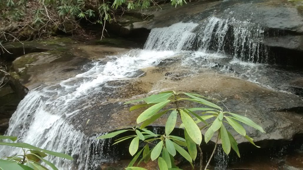 Neddie Creek runs through the 308-acre property, recently conserved by Mainspring Conservation Trust with financial assistance from Jackson County Board of Commissioners